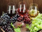 What grapes are used for wines?